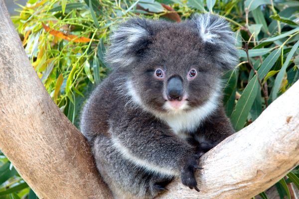 Programmi di ripristino in Australia - Lonely Planet
