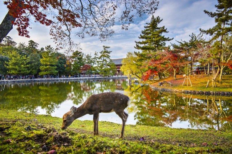 Foliage, il regalo dell'autunno