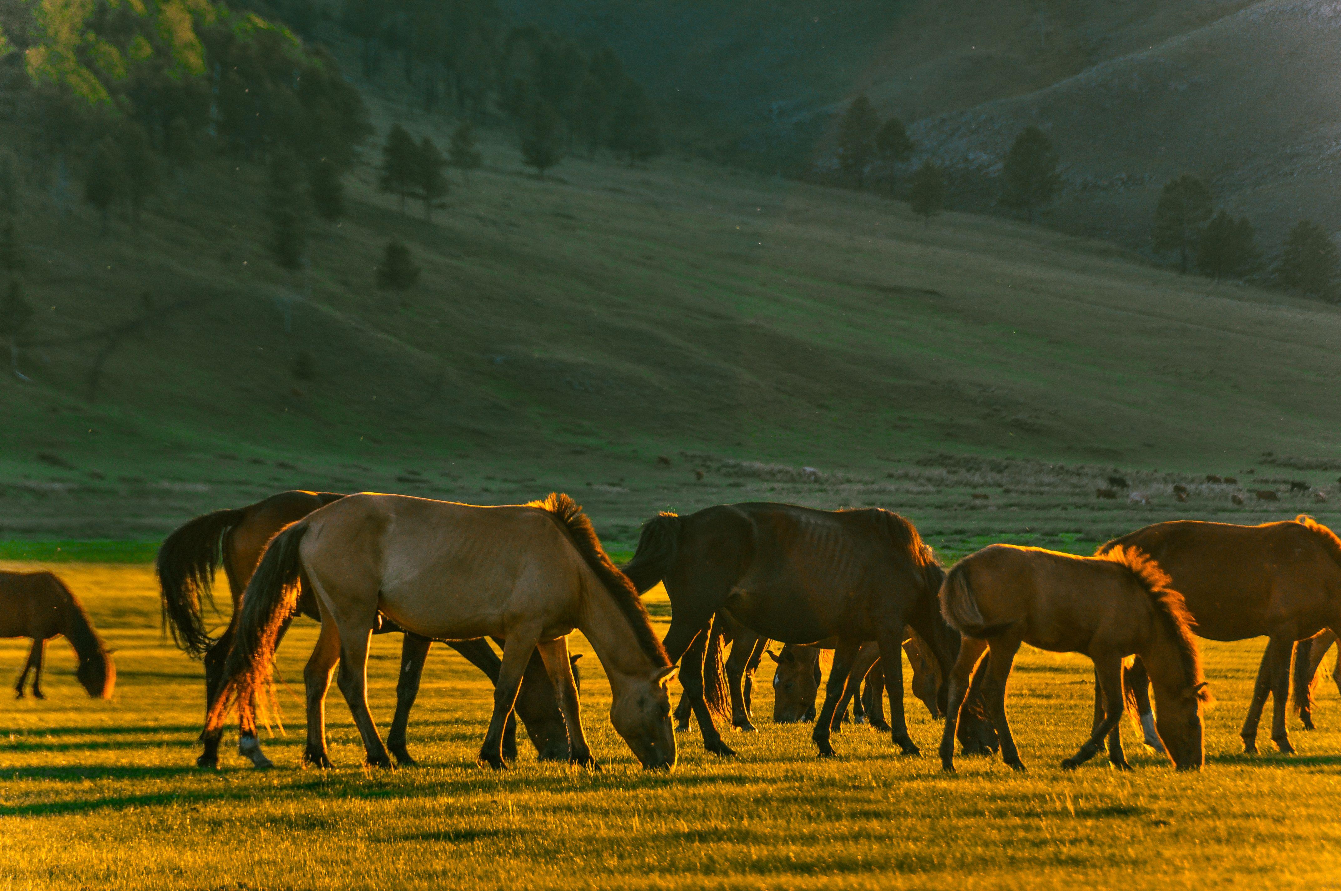 In Mongolia a cavallo: in viaggio da sola tra steppe e montagne