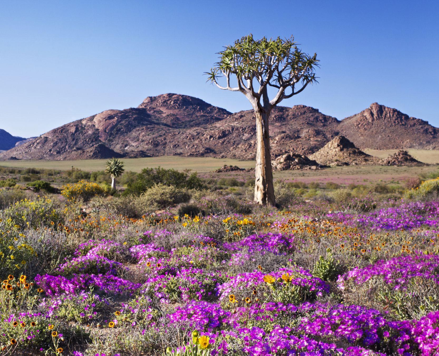 In Sudafrica per la spettacolare fioritura nel Namakwa