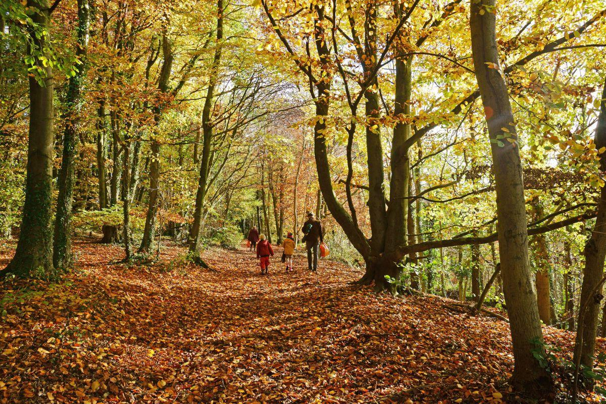 Le migliori avventure d'autunno per tutta la famiglia